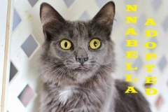 Annabella - Adopted - August 30, 2018