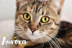 Aurora-Adopted-on-July-28-2019
