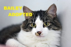 Bailey - Adopted - July 29, 2018 with Remy
