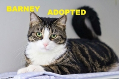 Barney - Adopted - July 22 2018