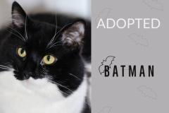 Batman-Adopted-on-April-5-2019-with-Kalahari