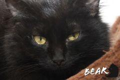 Bear-Adopted-on-May-23-2020