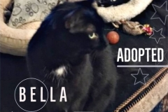 Bella-Adopted-on-April-6-2019