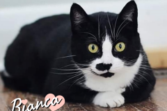 Bianca-Adopted-on-May-16-2020