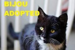 Bijou - Adopted - April 8, 2018 with Eden
