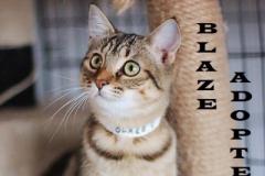 Blaze - Adopted on January 20, 2019