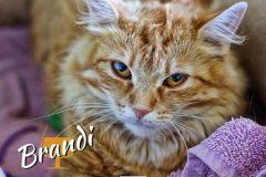 Brandi-Adopted-on-October-27-2019