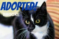 Brooke - Adopted - July 2017