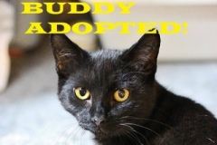 Buddy - Adopted on November 7, 2018 with Oneyea