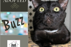 Buzz-Adopted-on-April-6-2019