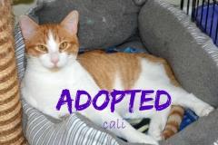 Cali - Adopted - June 11,2017