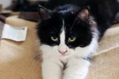 Checkers - Adopted on February 2, 2019 with Stormy