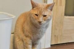 ChinChin - Adopted - September 1, 2018