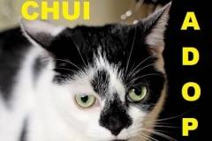 Chui - Adopted - May 7, 2018