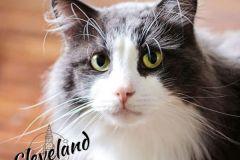 Cleveland-Adopted-on-September-28-2019