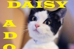 Daisy - Adopted - February 10, 2018 - with Forest