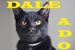Dale - Adopted - February 11, 2018 - with Raven