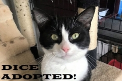 Dice - Adopted on February 8, 2019 with Trixie