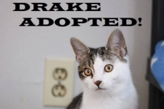 Drake - Adopted on February 23, 2019 with Katie