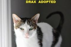 Drax - Adopted - November 25, 2017