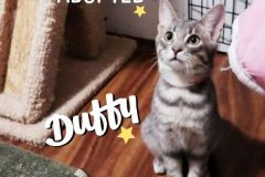 Duffy-Adopted-on-January-26-2020