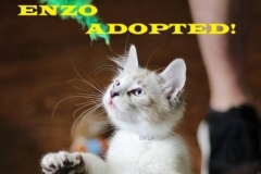 Enzo - Adopted - September 20, 2018 with Petunia