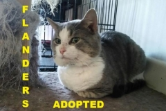 Flanders - Adopted - May 18, 2018 with Travis