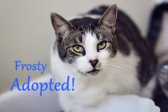 Frosty - Adopted - August 7th, 2017