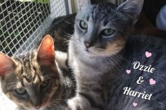 Harriet-and-Ozzie-Adopted-on-November-24-2019