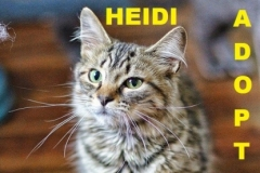 Heidi - Adopted - May 28, 2018 with Snickers
