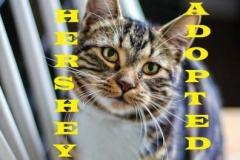 Hershey - Adopted - January 20, 2018