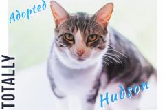 Hudson-Adopted-on-May-30-2019