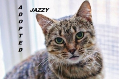 Jazzy - Adopted - December 16, 2017