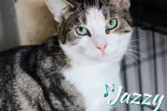 Jazzy-Adopted-on-August-12-2019