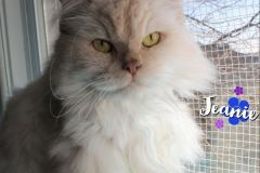 Jeanie-Adopted-on-April-25-2020-with-Mikey