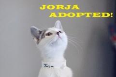 Jorja - Adopted - September 24, 2018 with Maggie
