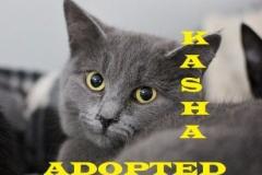 Kasha - Adopted - January 27, 2018