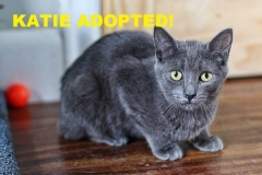 Katie - Adopted - June 16, 2018