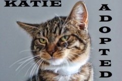 Katie - Adopted on February 23, 2019 with Drake