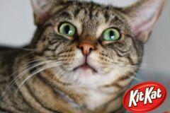 KitKat-Adopted-on-December-28-2019