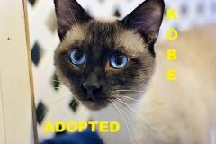 Kobe - Adopted - May 15, 2018 with Eddie