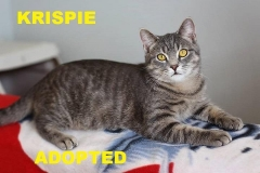 Krispie - Adopted - March 10, 2018 with Caramel