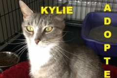 Kylie - Adopted - July 8, 2018