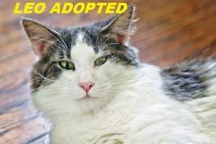 Leo - Adopted - December 2, 2017