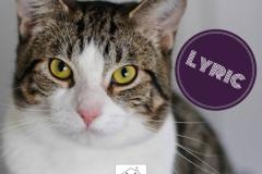 Lyric-Adopted-on-April-14-2019