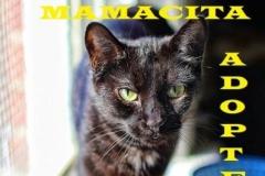 Mamacita - Adopted - February 11, 2018