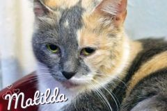 Matilda-Adopted-on-August-16-2019
