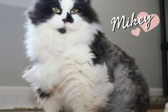 Mikey-Adopted-on-April-25-2020-with-Jeanie