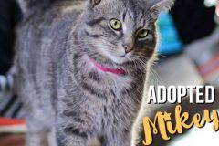 Mikey-Adopted-on-February-8-2020