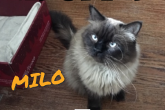 Milo-Adopted-on-May-5-2019-with-Ginny